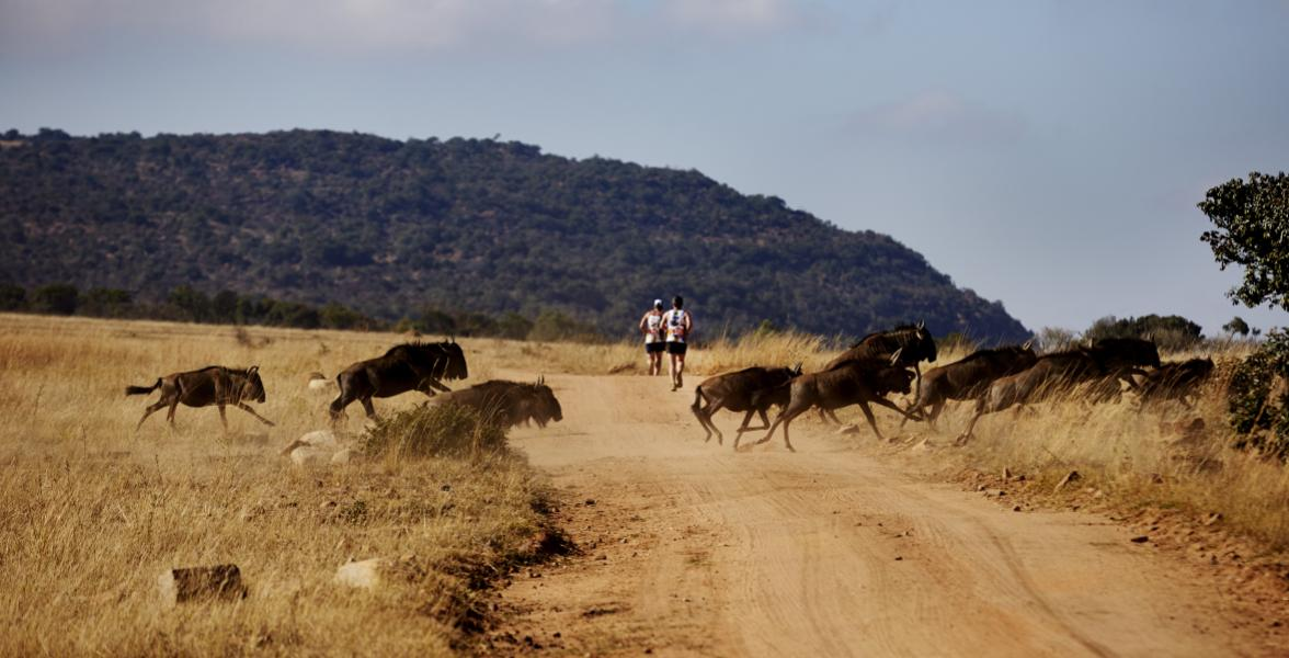 Big Five Marathon 2015